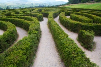 Get Out of Weeds and Learn the Difference: Digital Strategy, Plan and Tactics